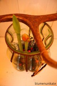 amaryllisliebevier